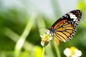 Tom Allen Memorial Butterfly Garden