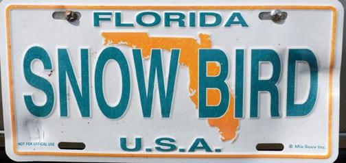 florida-snowbird.jpg